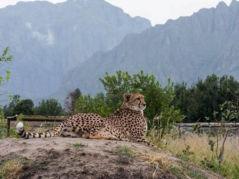 Ashia Cheetah Sanctuary